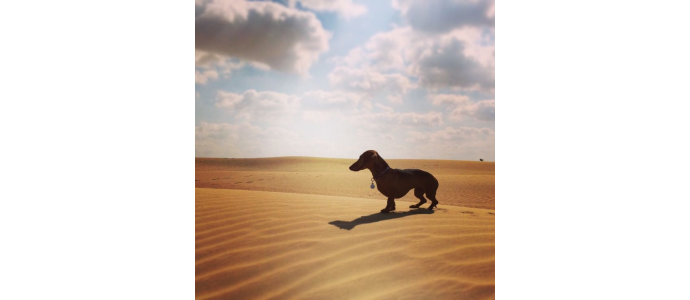 How to take care of your dog in the heat of UAE